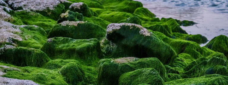 algen-detox