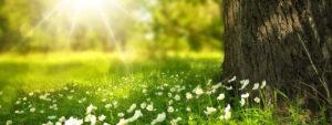 fruehling-natur-erholung