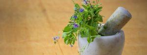 naturmedizin-heilpflanzen