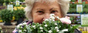 Oma-Blumen
